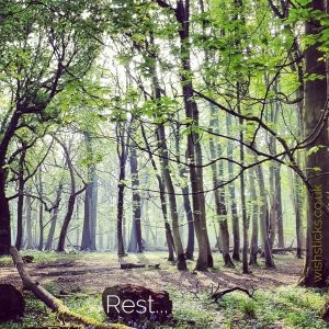 Peaceful woodland scene encouraging rest